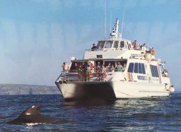 Oddyssee 3 Glasbodenboot